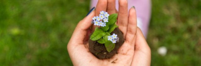 close up of woman's hands holding forget me not flowers on soil