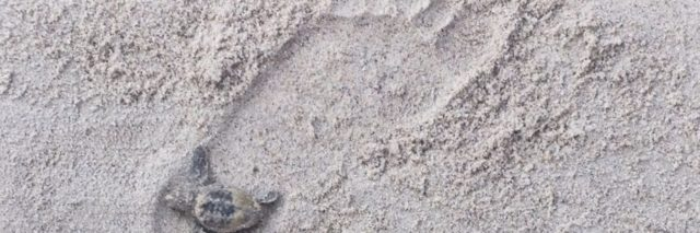single footprint in the sand with a small turtle in the heel of the foot