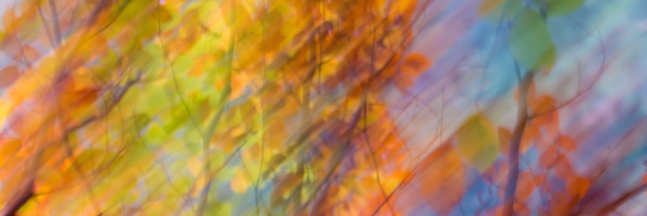Blurred photo of autumn leaves in trees