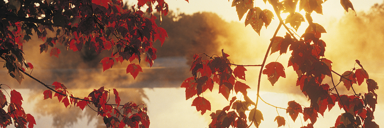 Autumn leaves against sunlight and a tree-lined lake in the background