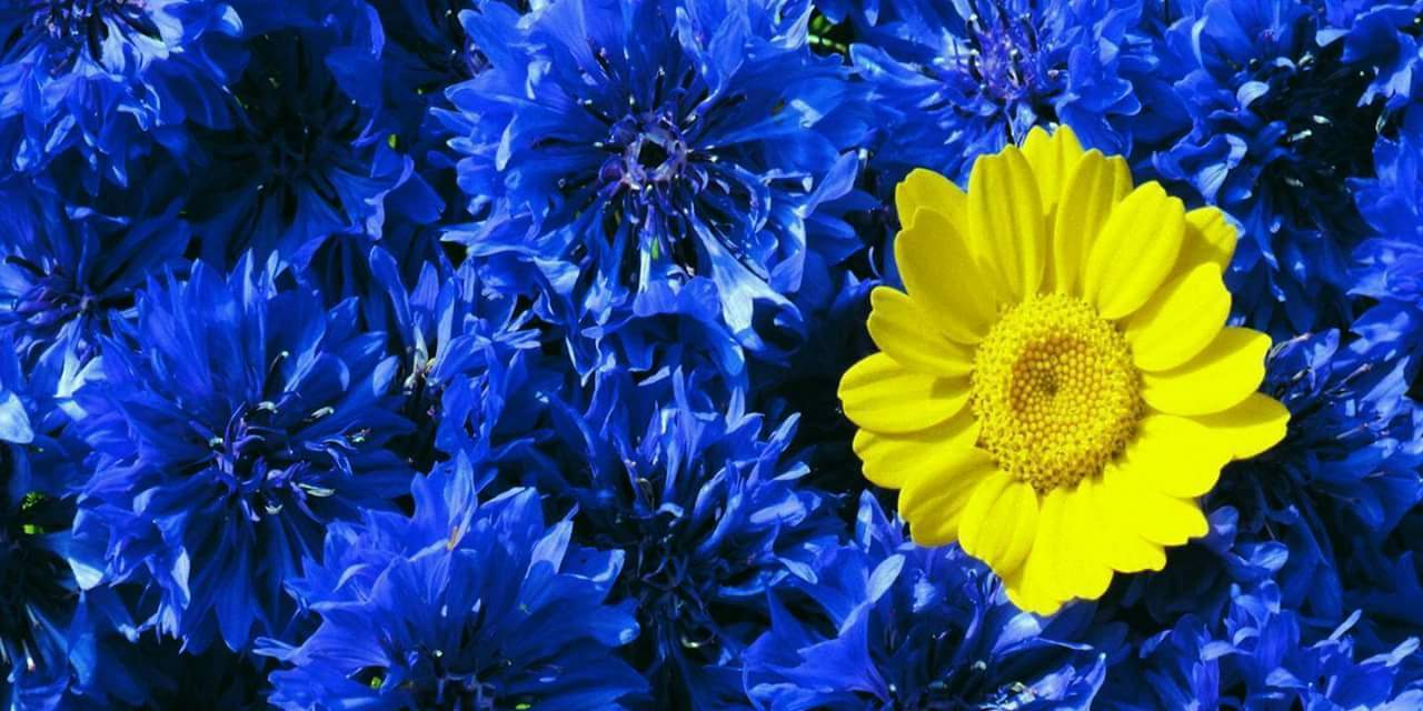 Babies With Down Syndrome Are Like A Yellow Flower In Blue Bouquets