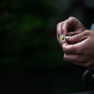 hands holding small flower