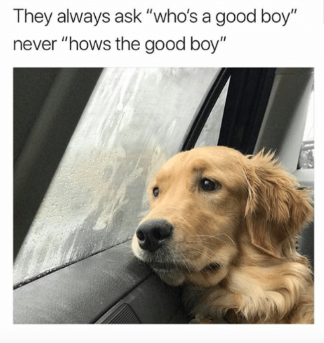 Memes That Perfectly Describe Living With Anxiety During The - 17 memes youd definitely send your dog if you could