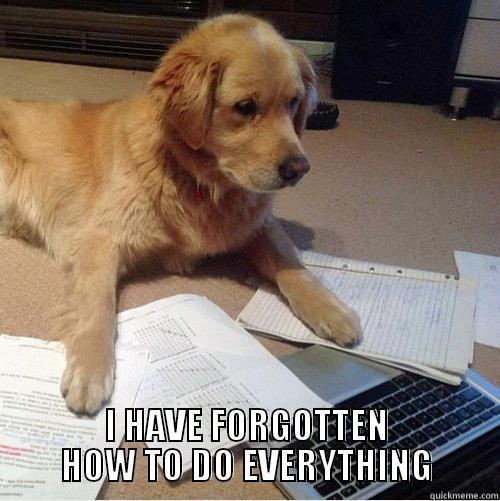 dogputer forgetful meme