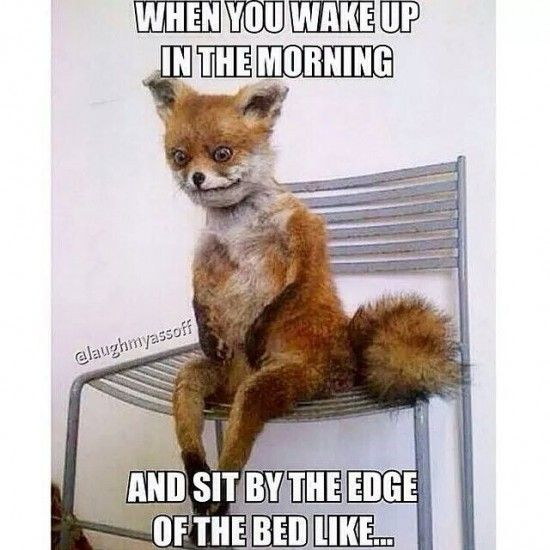 e485690c5bca129e00e515dbe1204462 16 memes that might make you laugh if you're always tired the mighty