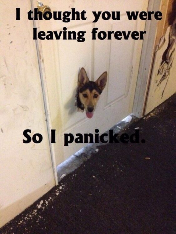 i thought you were leaving forever so I panicked