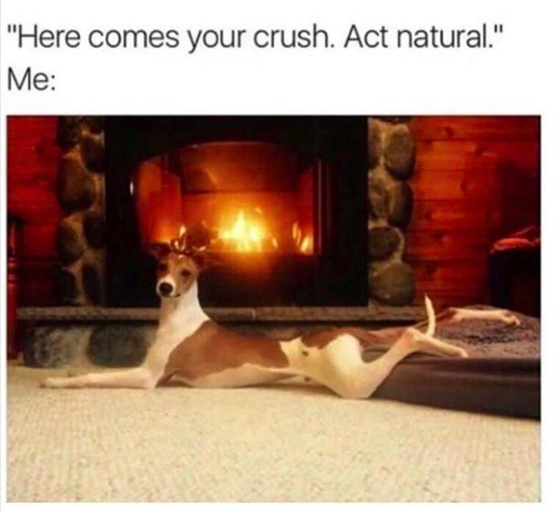 act natural dog meme