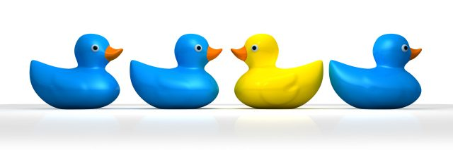 Yellow rubber bath duck swimming in a different direction to the other three blue ducks