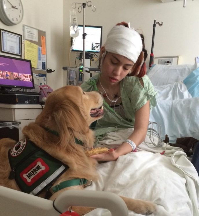 Savannah in the hospital with a therapy dog