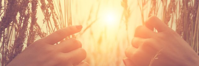 Looking through wheat at sun.