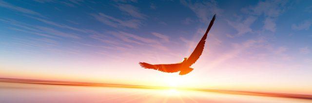 Flying bird.