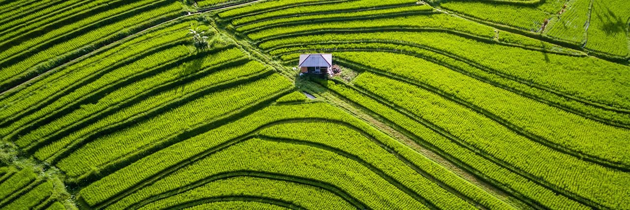 A shot of Bali, Indonesia, rice fields