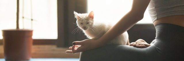 A woman doing yoga with a cat on her lap.