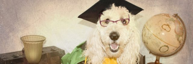 A picture of a dog wearing a graduation gown, surrounded by things like globes.
