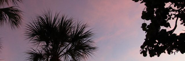 silhouette of trees against a purple night sky
