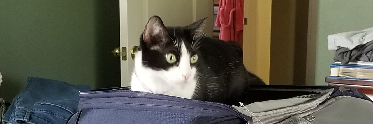 black and white cat sitting on top of an open suitcase