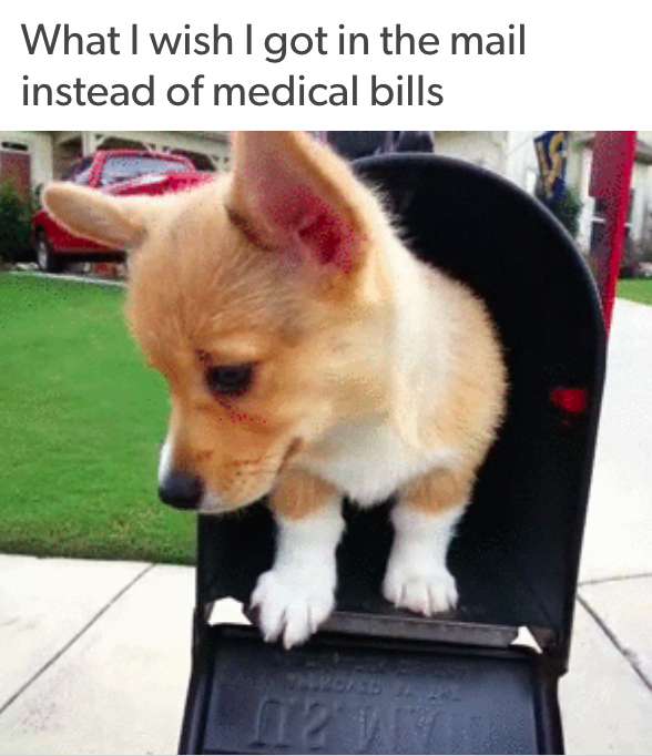 what I wish I got in the mail instead of medical bills: with a picture of corgi puppy standing inside of a mailbox and looking adorably perplexed at its situation