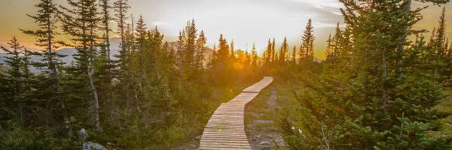 Beautiful wooden pathway in green mountain forest.