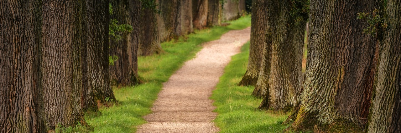 path leading through a forest