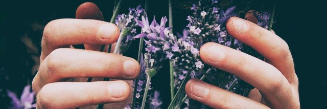 close up of woman's hands holding purple flowers