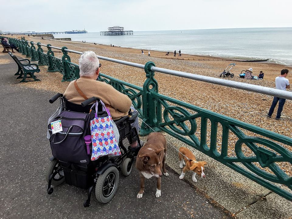 woman sitting in her wheelchair with two dogs at her feet looking out over a beach