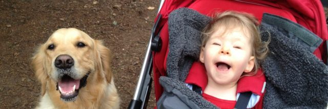 Little girl in stroller, wrapped in a blanket with a golden retriever by her side.