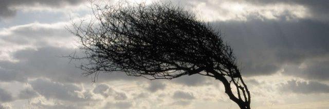 tree bending in the wind