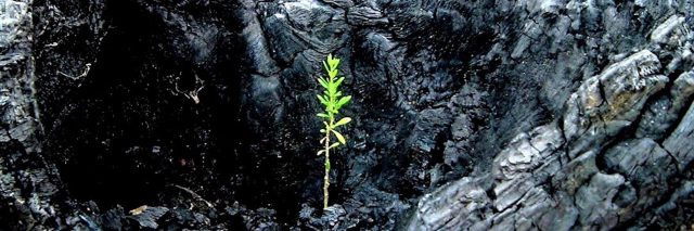 a single green plant sprouting up from dark rock