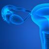 Illustration of the uterus/ovaries