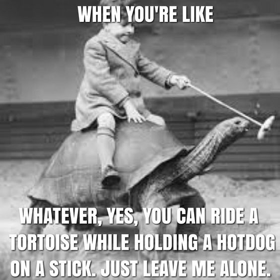 when you're like whatever, yes, you can ride a tortoise while holding a hotdog on a stick. Just leave me alone.