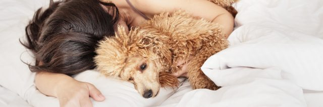 A woman lying in bed, snuggled up to her poodle.
