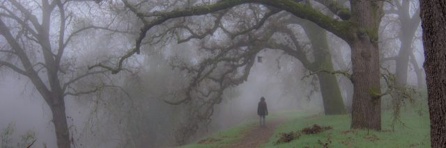 A woman walking into a layer of fog in the woods.