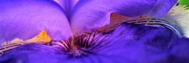An up close shot of a purple flower.