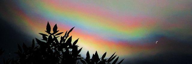 rainbow over dark leaves