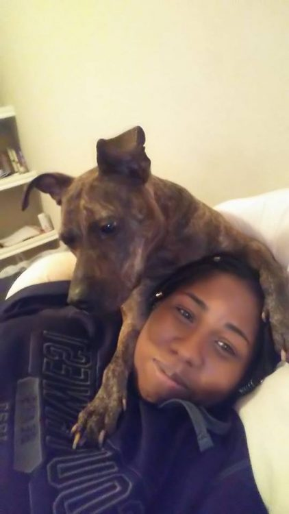 service dog on owner's head, snuggling