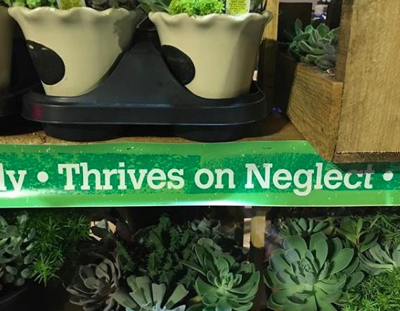 thrives on neglect meme