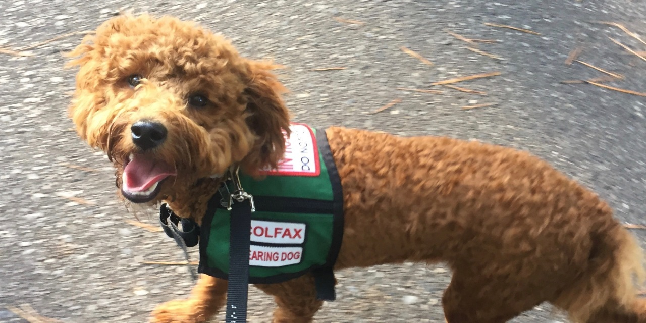When I Tried to Train My Own Service Dog | The Mighty