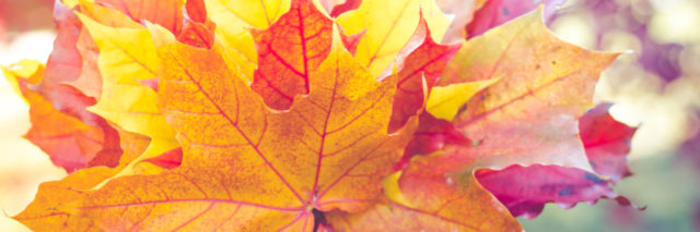 a handful of orange, yellow and red leaves for Fall