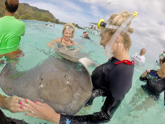 woman snorkeling with sting ray