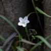 White flower under a tree.